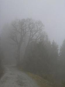 Baum im Nebel (Steiermark)